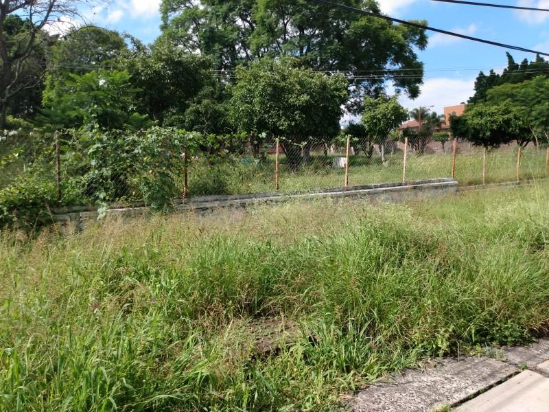 Necesario mantenimiento de áreas verdes en CBTis#12