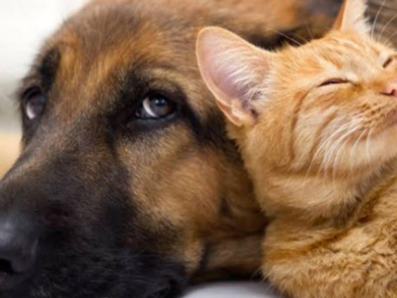 Necesario promover la tenencia responsable de mascotas