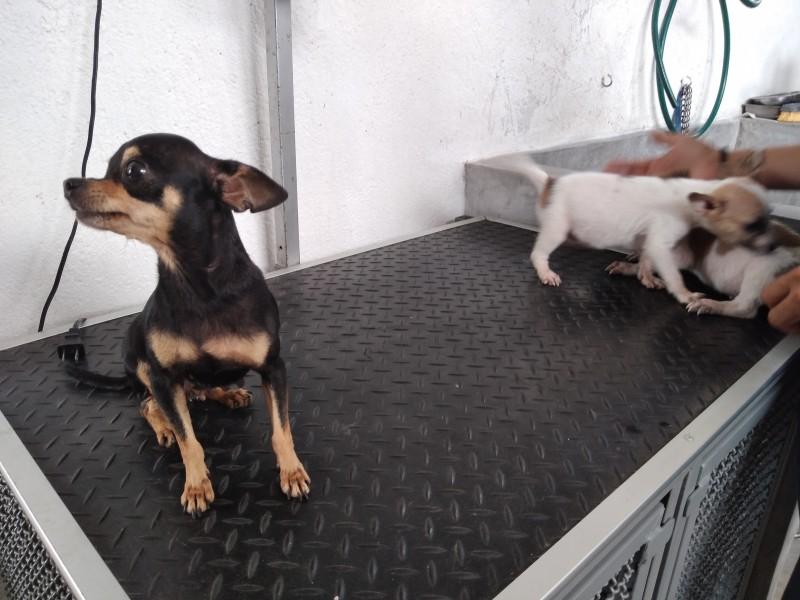 Necesario regular tema de maltrato animal en Oaxaca