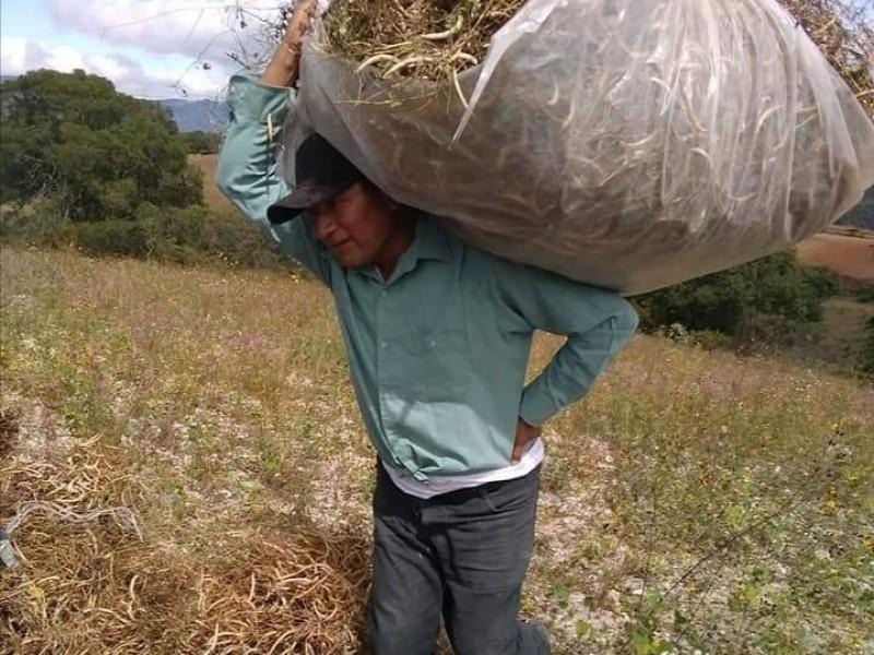 Necesidad de alimento dispara robo hormiga en campos agrícolas