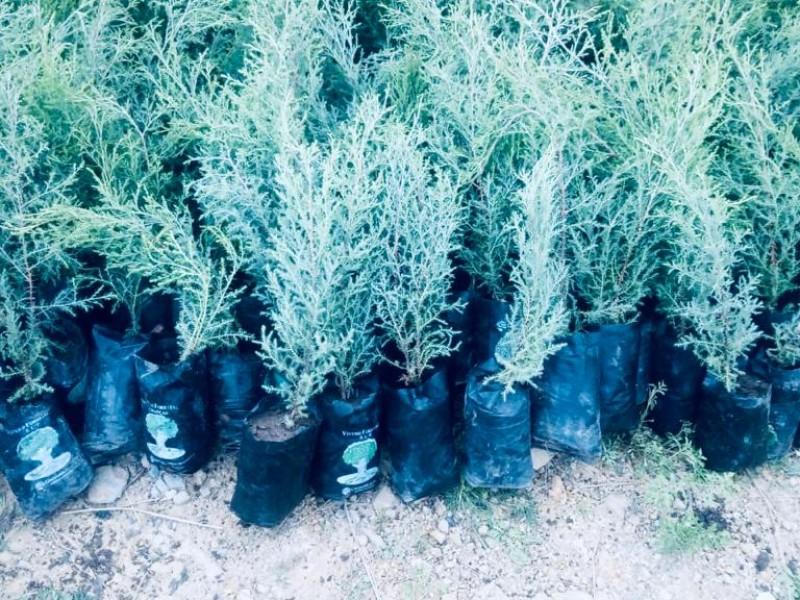 Norveracruzanos en campaña de reforestación nacional