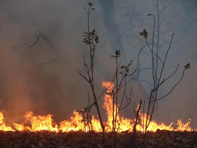 Nuevamente intencional incendio en Bosque de la Primavera