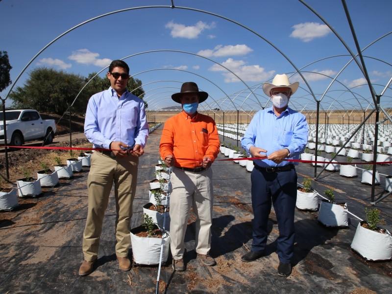 Nuevas tierras de producción de brócoli