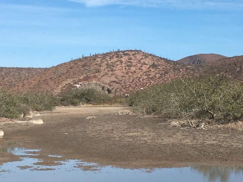 Obras de la SCT sí dañaron los manglares de Pichilingue