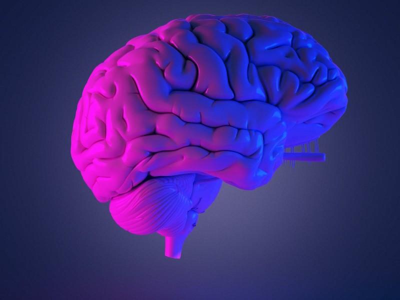 Observar o huir: las reacciones del cerebro ante diversas situaciones