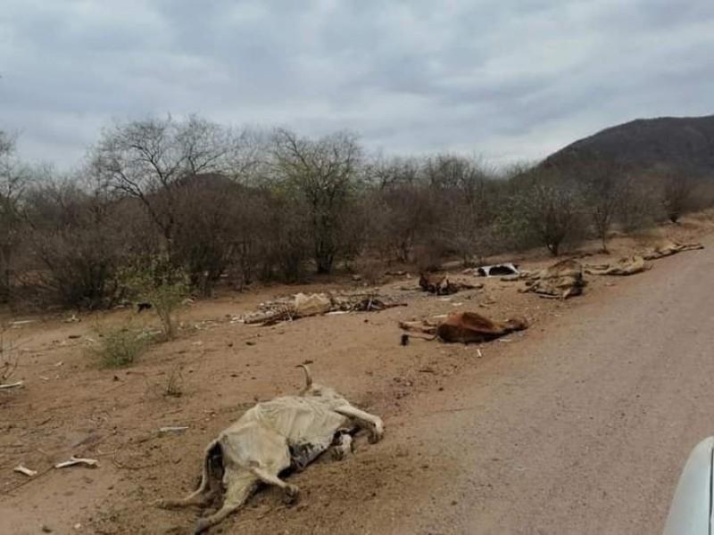 ¡Otra vez! surge la lucha por el agua en Sonora