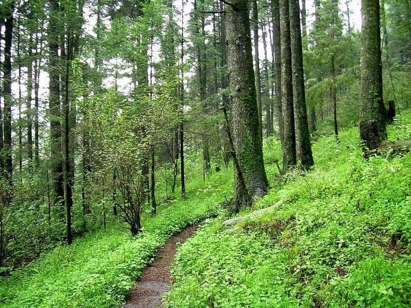 Pandemia dejó a Nayarit sin trabajos de protección forestal