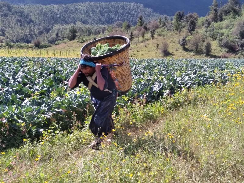 Pandemia por Covid-19 dejó sin trabajo a habitantes de Tanaco