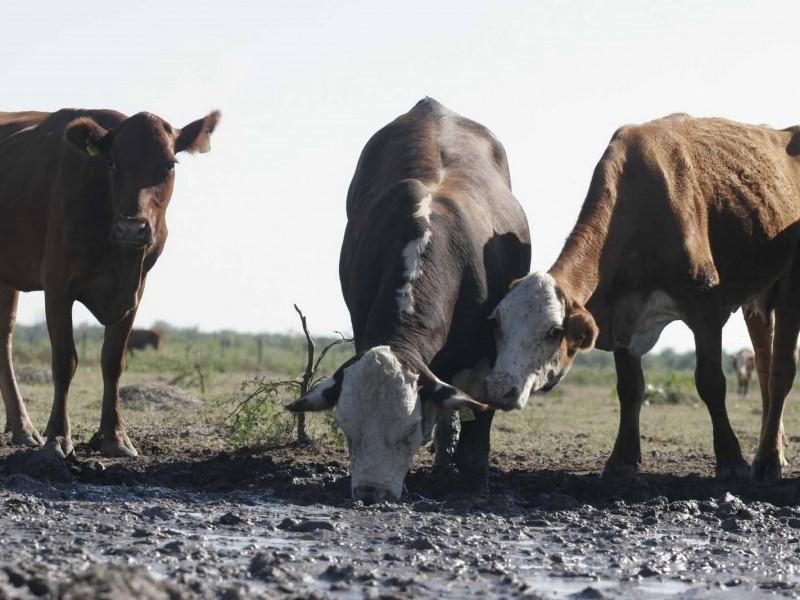 Pedirán declaratoria de emergencia por sequía