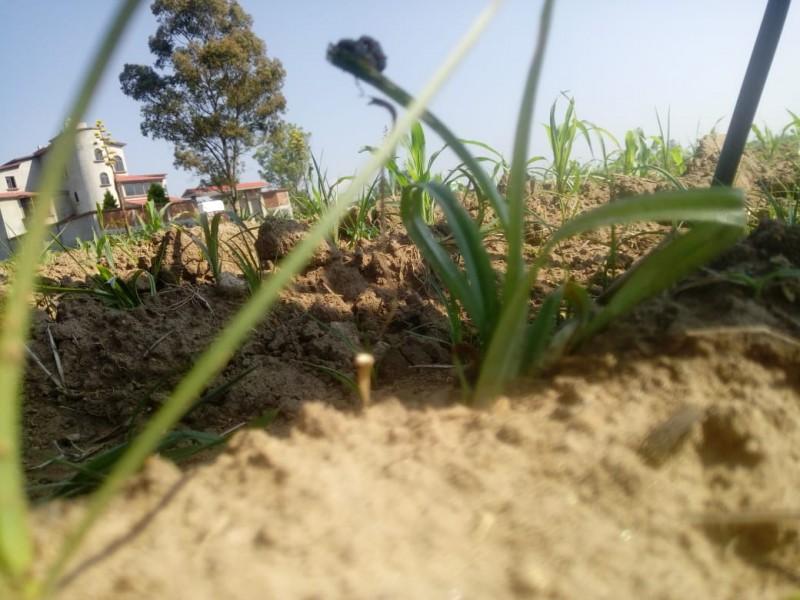 Peligran campos mexiquenses por granziadas