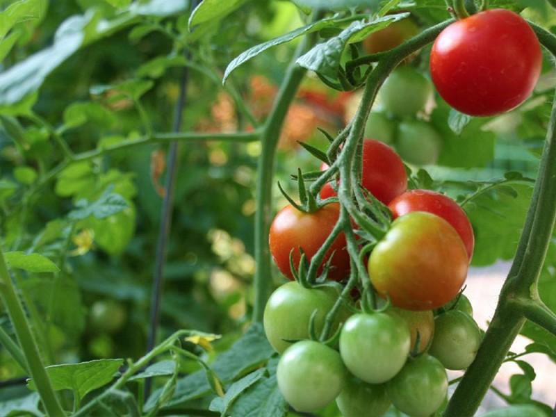 Pequeños y medianos productores dejarán de sembrar