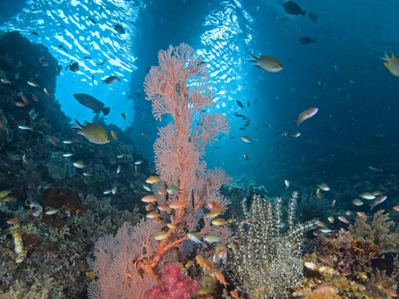 Pérdida de coral se debe al calentamiento global:UV