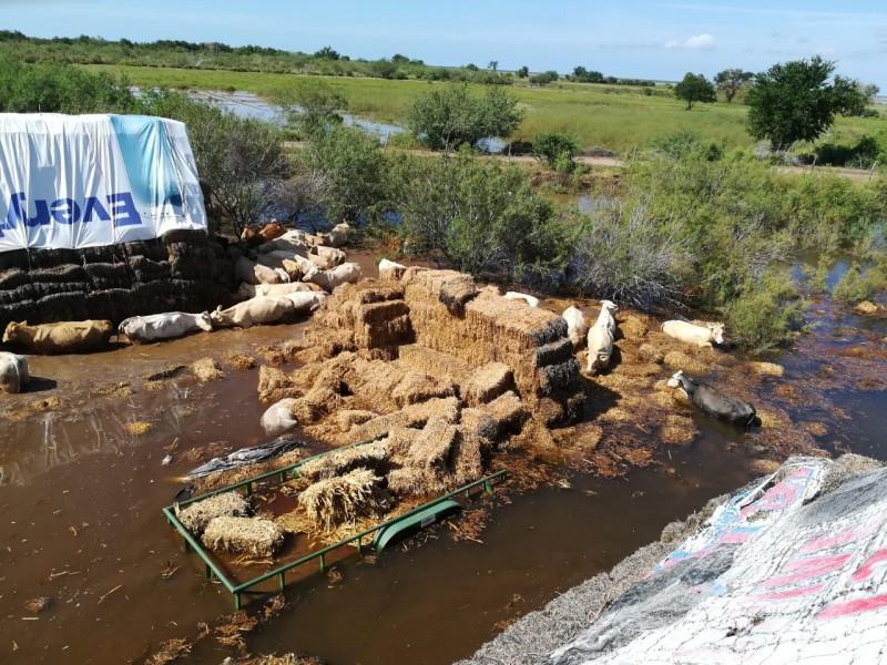 Pérdidas millonarias dejaron inundaciones en el sector ganadero