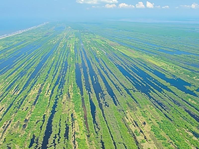 Perdió Nayarit el 90% de su vegetación nativa