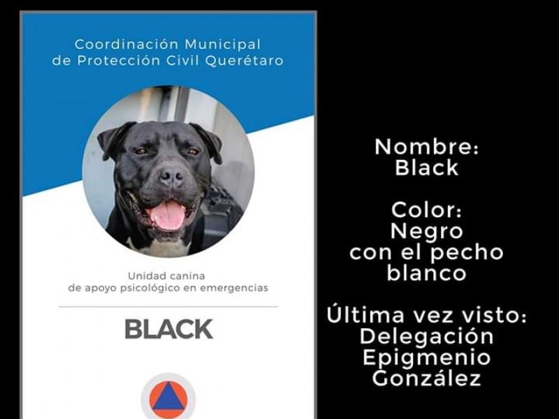 Perro entrenado de Protección Civil fue robado