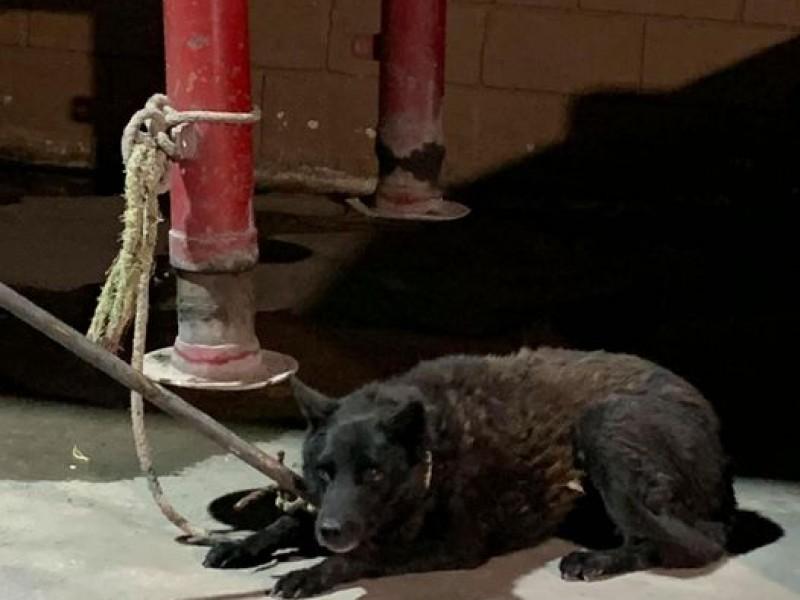 Perro muerde a menor de edad por culpa de pirotecnia