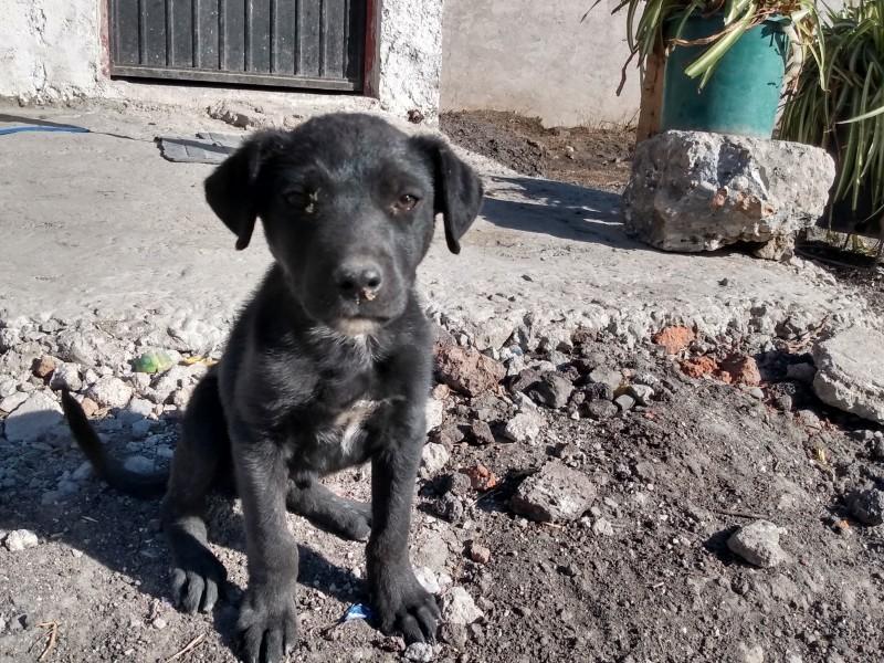 Perros callejeros, problema añejo y sin solución