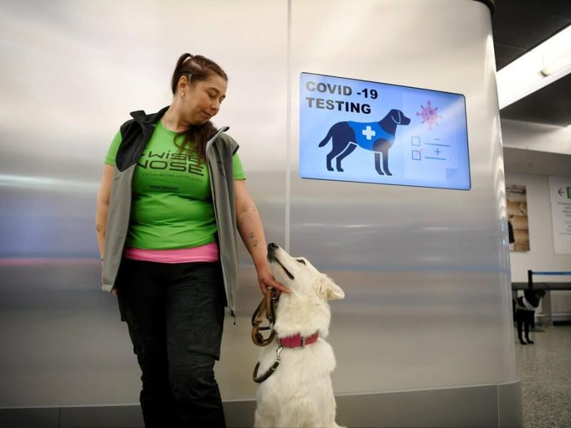 Perros rastreadores de covid-19 dan resultados prometedores