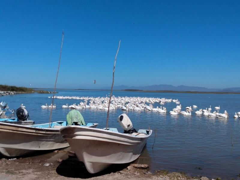 Pescadores de la Eustaquio Buelna piden parar extracciones