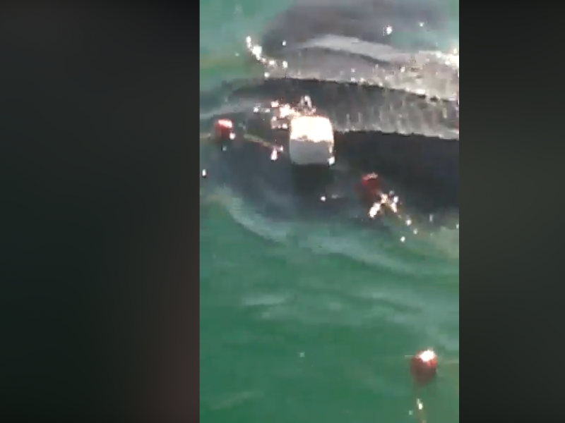 Pescadores rescatan a tortuga laúd en el Mar de Cortés