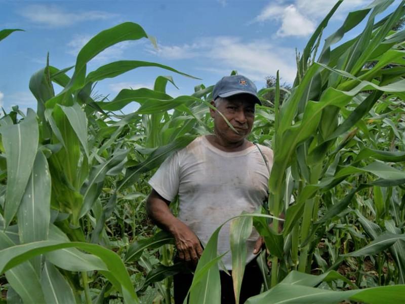 Pese a pandemia de Covid-19 agricultores continúan trabajando