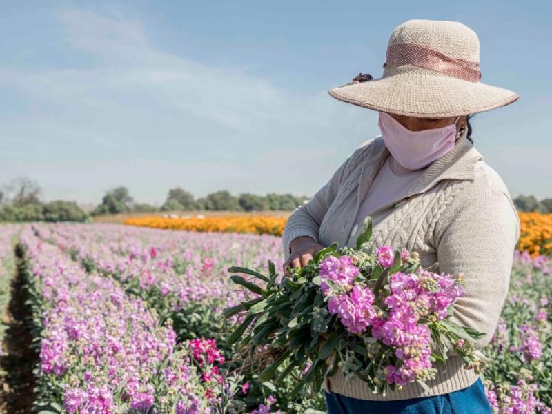 Pesé a restricciones, floricultores esperan ganancias este 12 de Diciembre