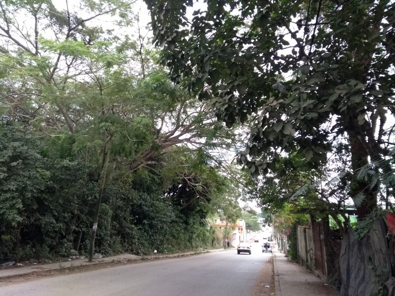 Piden a PC podar ramas de árboles