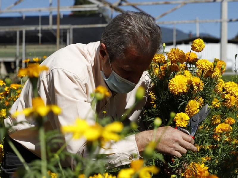 Piden consumir flor del productores mexiquenses