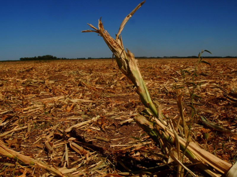 Piden crear proyecto que ayude al campo tras sequía