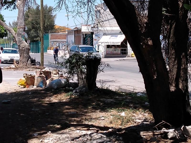 Piden dar mantenimiento a Mezquite en Killian II