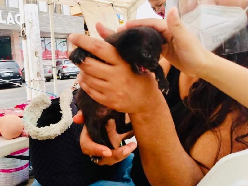 Piden denunciar maltrato animal