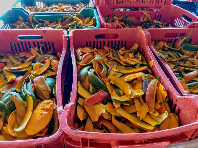 Piden evitar tiraderos clandestinos de mango y piña en Zamora