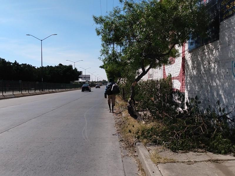Piden levantar desechos de árboles en Vértiz Campero