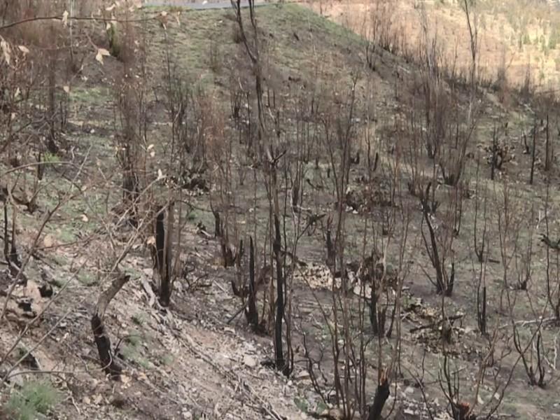 Piden mayor presupuesto para reforestaciones