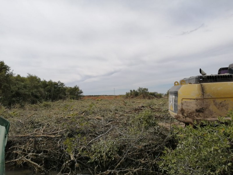 Piden pescadores freno a tala de mangle