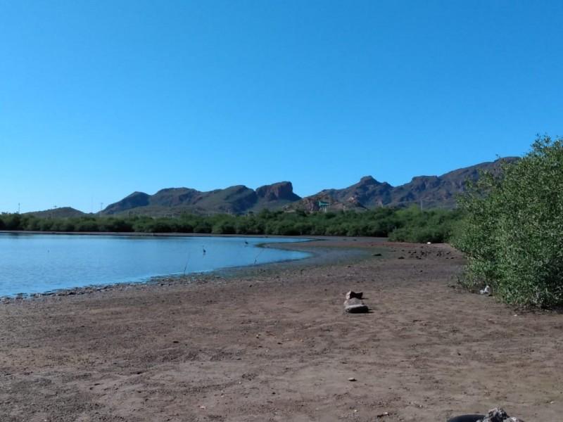Piden protección de Manglar de Río Escondido