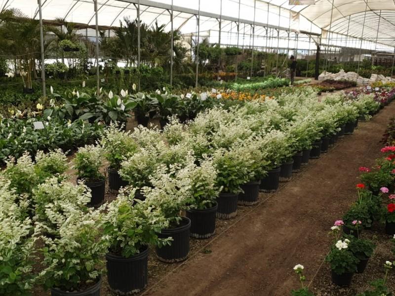 Piden reactivar venta de Flores para el 10 de mayo