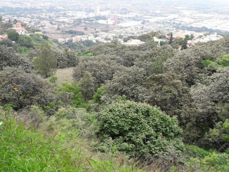 Piden reconsiderar subasta federal de terrenos en bosque La Primavera