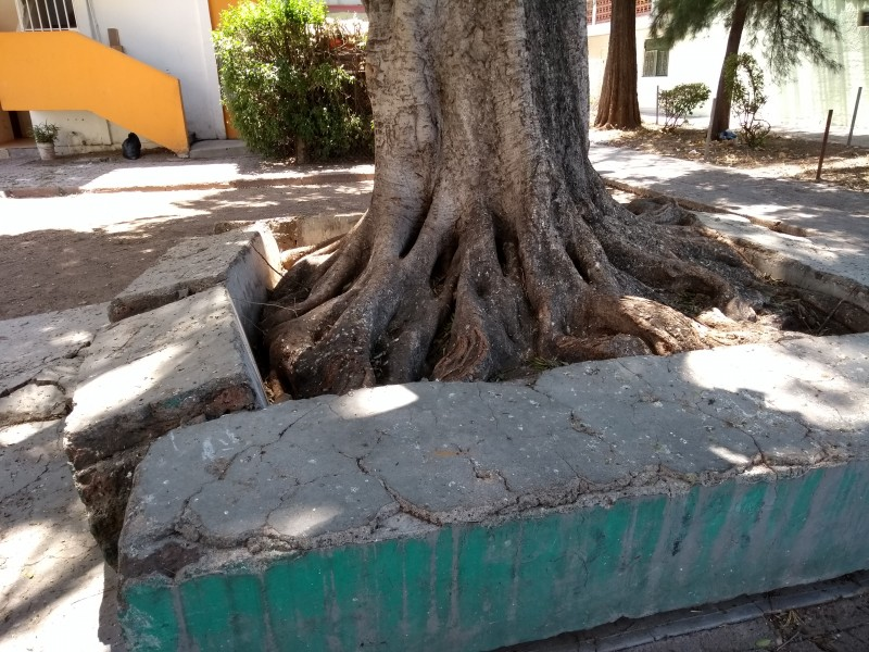 Piden remover árbol inseguro en la Azteca