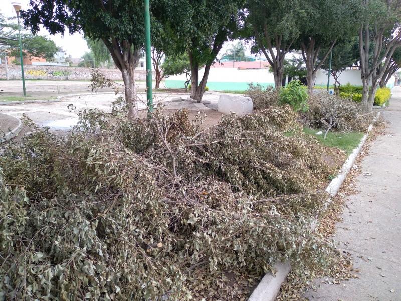 Piden retirar desechos de ramas en la San Francisco
