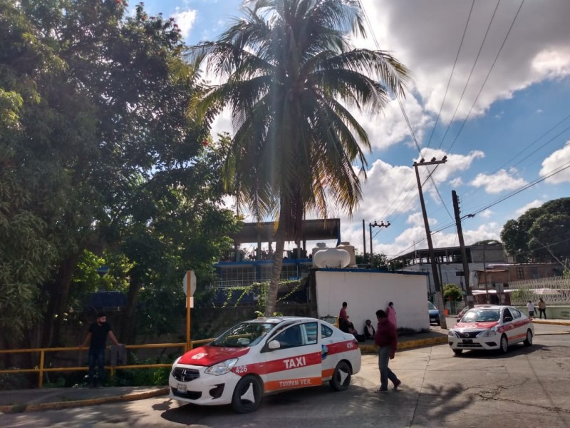 Piden retirar palmera de zona de taxis
