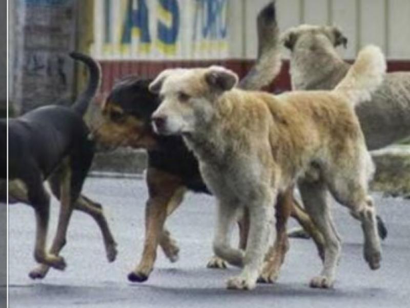Piden sanciones más severas contra el maltrato animal