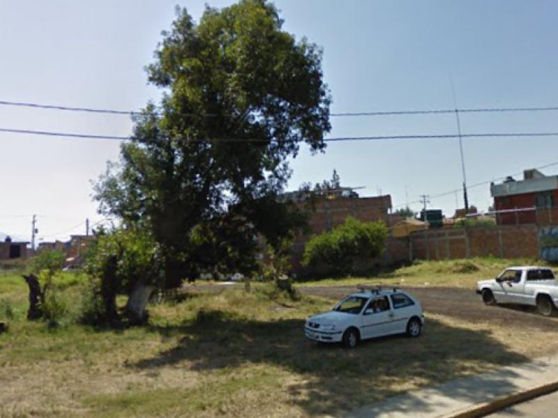 Piden vecinos poda de árboles en colonia Zamorana