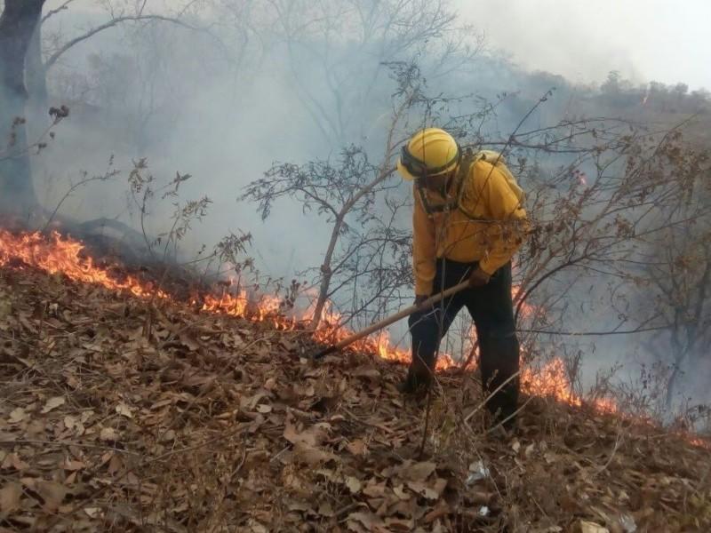 Pierde Chiapas 50mil hectáreas de superficie forestal