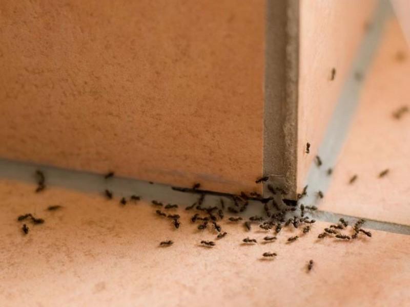 Plagas de insectos llegan con el verano