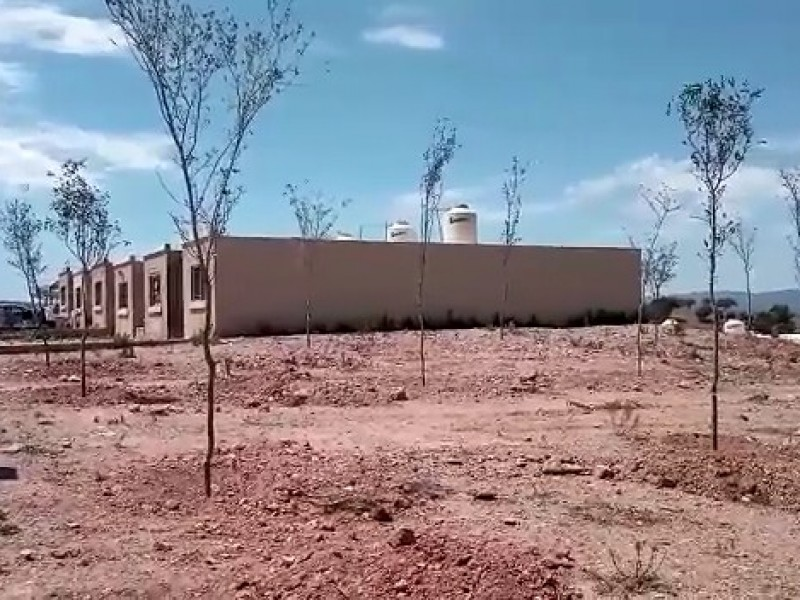 Plantan 400 árboles endémicos en fraccionamiento al sur