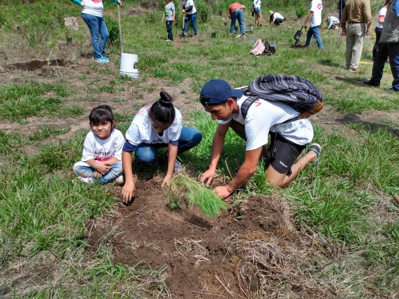 Plantan mil árboles en La Primavera
