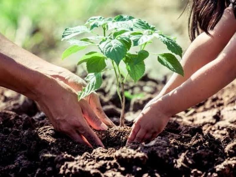 Plantarán 16 mil árboles este 2019