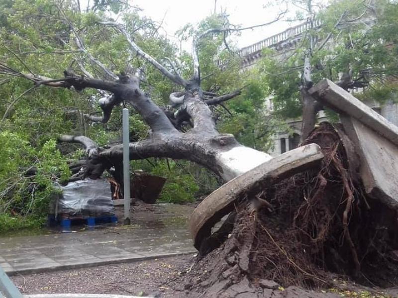 Plaza 13 de Julio afectada por vientos