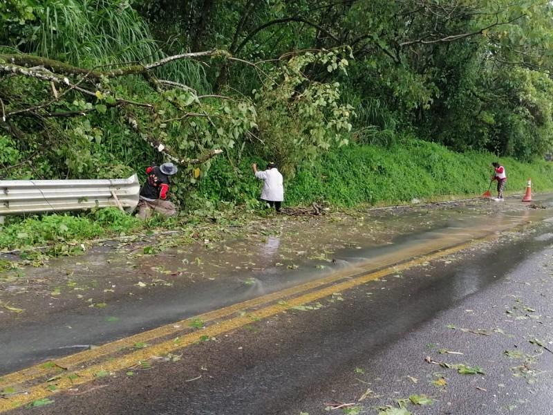 Pobladores de San Miguel Necaxa limpian carretera tras Grace